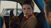 «Пальма»: Человек собаке – семья